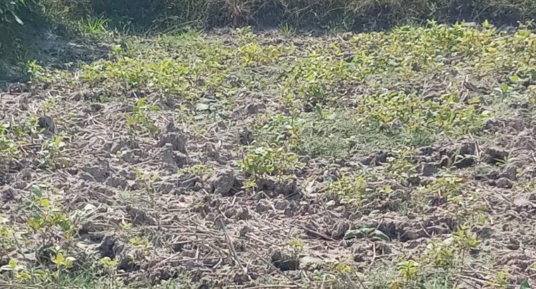 மட்டுவில் 14 பரப்பு வயல் காணி விற்பனைக்கு உண்டு