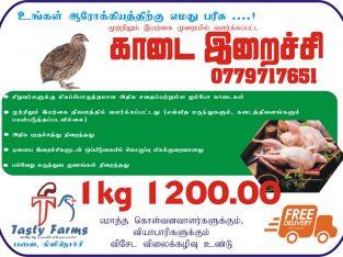 Quail meat for sale in Palai Kilinochchi