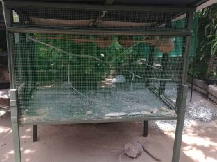 Love birds cage for sale nallur jaffna