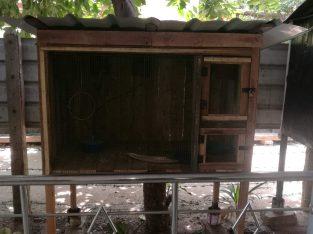 new cage for sale nallur Jaffna nallur